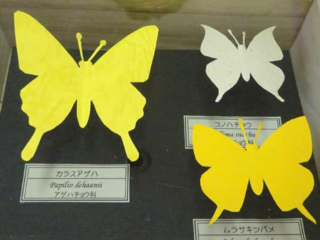 切り紙で作るオリジナル標本-チョウ